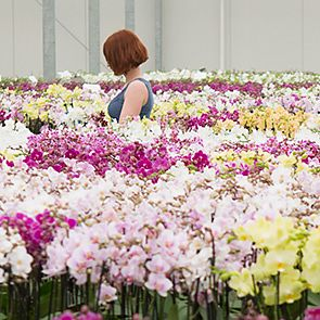 Meet our orchid growers