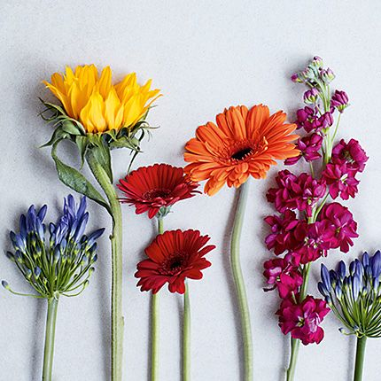 flowers plants online free next day delivery m s