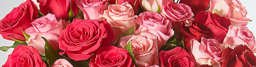 20% Off selected roses