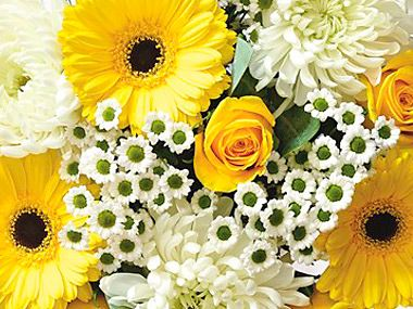 Bouquet of yellow and white flowers