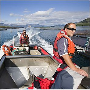 Scottish salmon farm employees at work on a loch