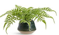 Artificial plant in pot