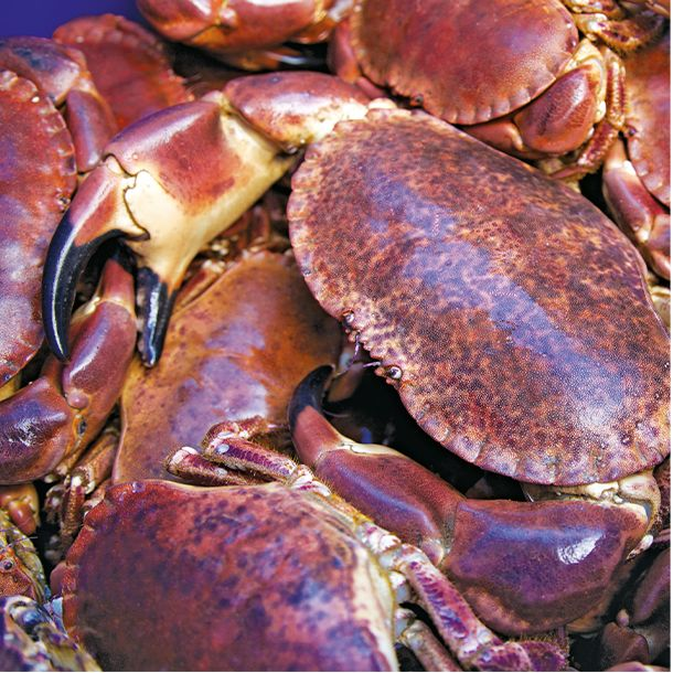 Brown crabs