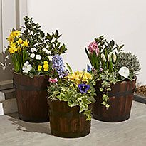Bright blooms and foliage in pots