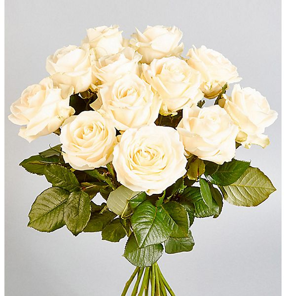 Editor's pick: Autograph Avalanche Roses