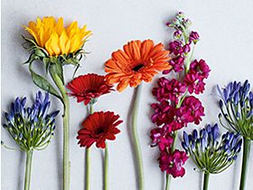 Selection of cut flowers