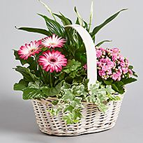 Basket of plants and flowers