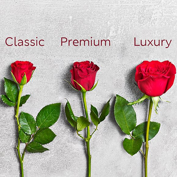a4cb0a9a72f95 Classic, Premium and luxury rose heads on a grey background