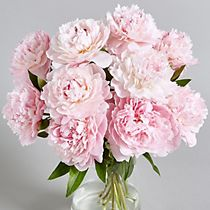 A bouquet of peonies