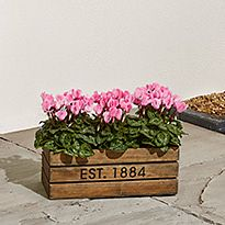 Planter filled with pink flowers