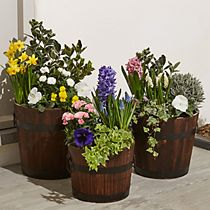 Set of three spring planters