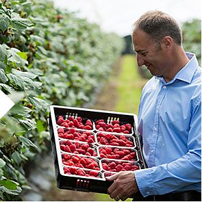 A farmer with a tray of Sapphire raspberries
